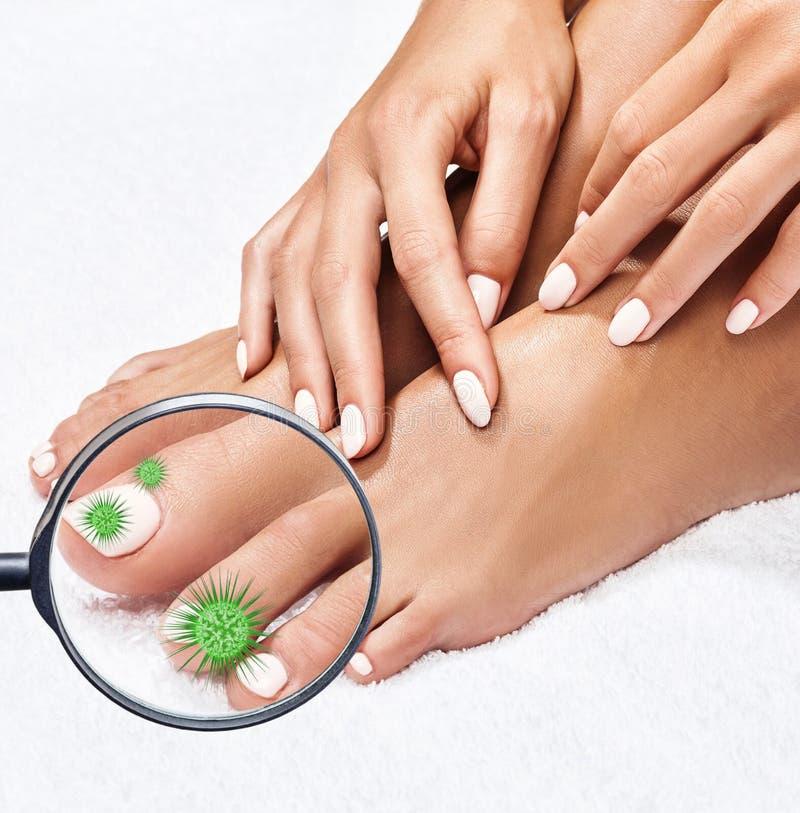 Τα μικρόβια στα θηλυκά πόδια παρουσιάζουν με το γυαλί στοκ εικόνες με δικαίωμα ελεύθερης χρήσης