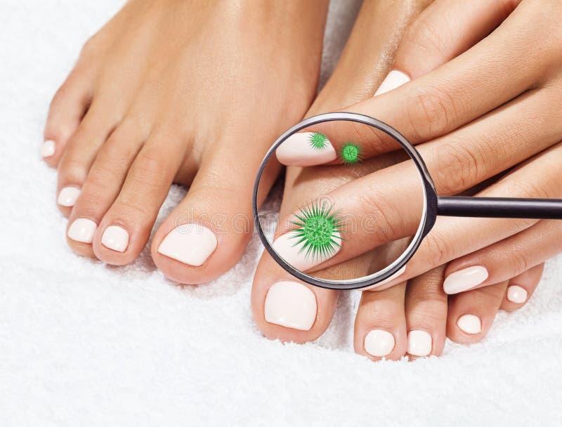 Τα μικρόβια στα θηλυκά πόδια παρουσιάζουν με το γυαλί στοκ εικόνα