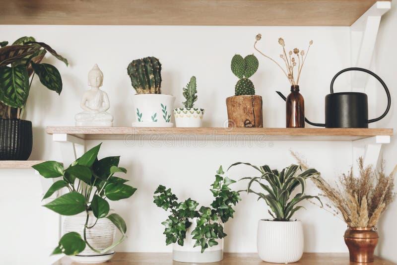 Τα μοντέρνα ξύλινα ράφια με τις πράσινες εγκαταστάσεις, μαύρο πότισμα μπορούν, wildflowers και άγαλμα budha Σύγχρονο ντεκόρ δωματ στοκ εικόνα με δικαίωμα ελεύθερης χρήσης