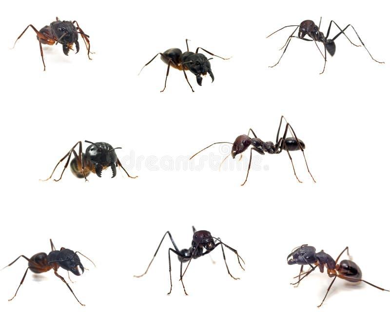 τα μυρμήγκια κλείνουν τ&omicron στοκ εικόνες με δικαίωμα ελεύθερης χρήσης