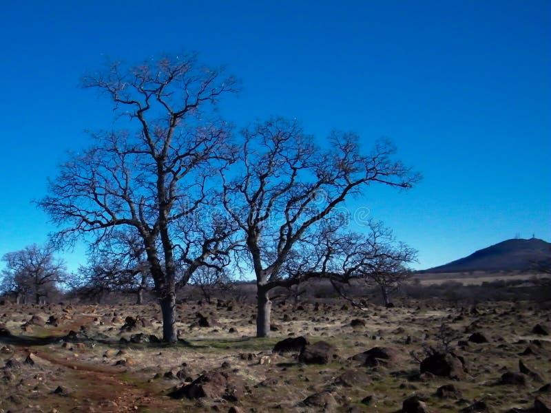 Τα μόνα δέντρα Jed αγνοούν στοκ φωτογραφία με δικαίωμα ελεύθερης χρήσης