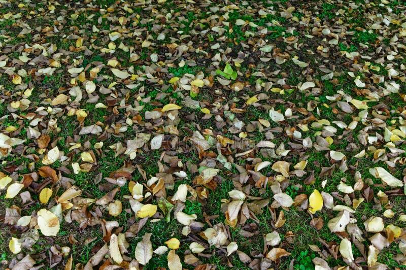 Τα νεκρά φύλλα βρίσκονται στη χλόη στοκ φωτογραφία με δικαίωμα ελεύθερης χρήσης