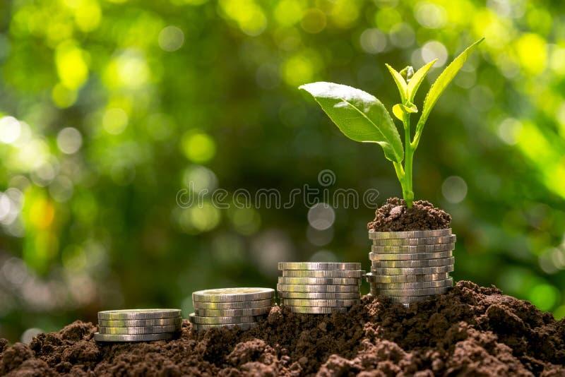Τα νομίσματα με τις εγκαταστάσεις στην κορυφή βάζουν στο χώμα στο πράσινο backgrou φύσης στοκ εικόνα με δικαίωμα ελεύθερης χρήσης