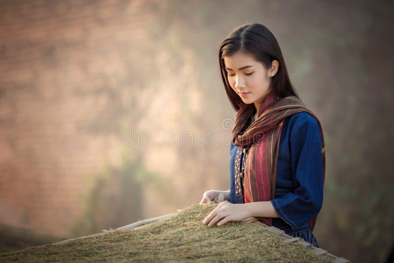 Τα ξηρά λαοτιανά κορίτσια φύλλων καπνών επιλέγουν την ποιότητα του γ στοκ φωτογραφίες
