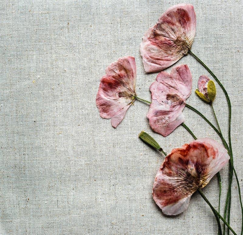 Τα ξηρά κόκκινα λουλούδια παπαρουνών μοιάζουν με την κεντητική στο υπόβαθρο λινού στοκ εικόνες