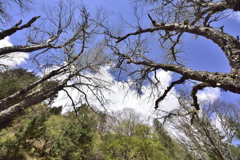 Τα ξύλα και το τοπίο του λευκού μπλε ουρανού καλύπτουν στοκ εικόνες με δικαίωμα ελεύθερης χρήσης