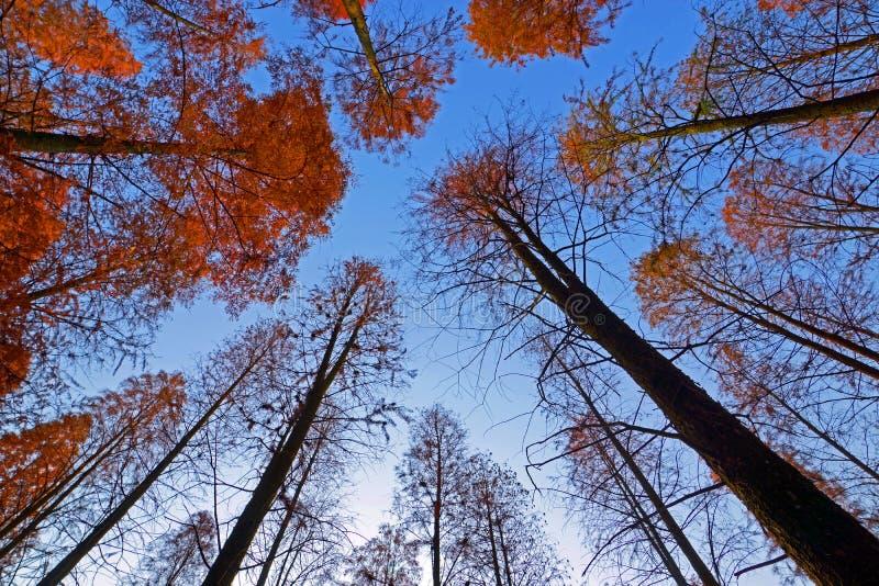 Τα ξύλα στοκ εικόνα με δικαίωμα ελεύθερης χρήσης