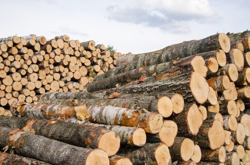 Τα ξύλινα κούτσουρα σημύδων και πεύκων καυσίμων συσσωρεύουν κοντά στο δάσος στοκ εικόνα