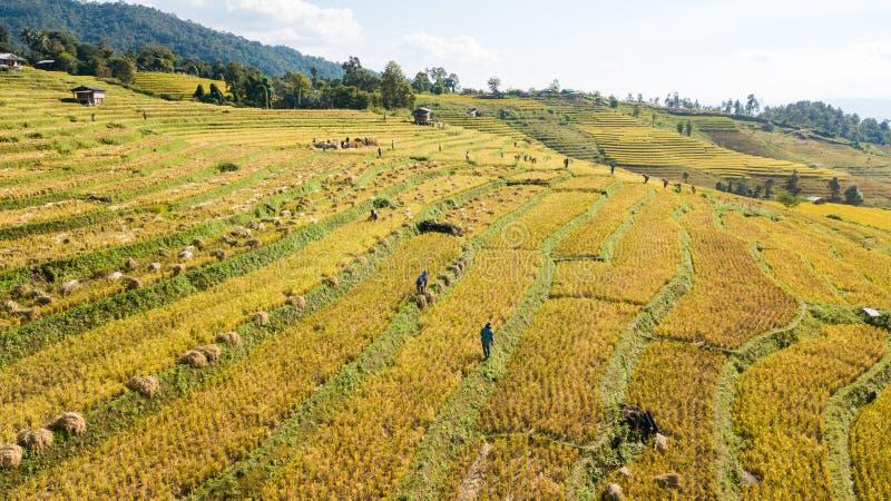 Τα ομορφότερα πεζούλια ρυζιού σε λίγο χωριουδάκι των κυλώντας πεζουλιών ρυζιού στοκ εικόνες