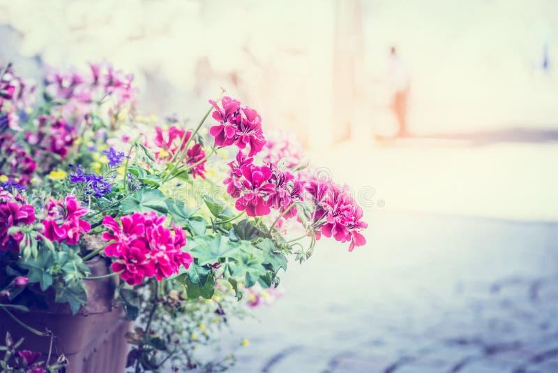 Τα λουλούδια γερανιών σε ένα δοχείο στην οδό στο ηλιακό υπόβαθρο θολώνουν την πόλη στοκ εικόνα