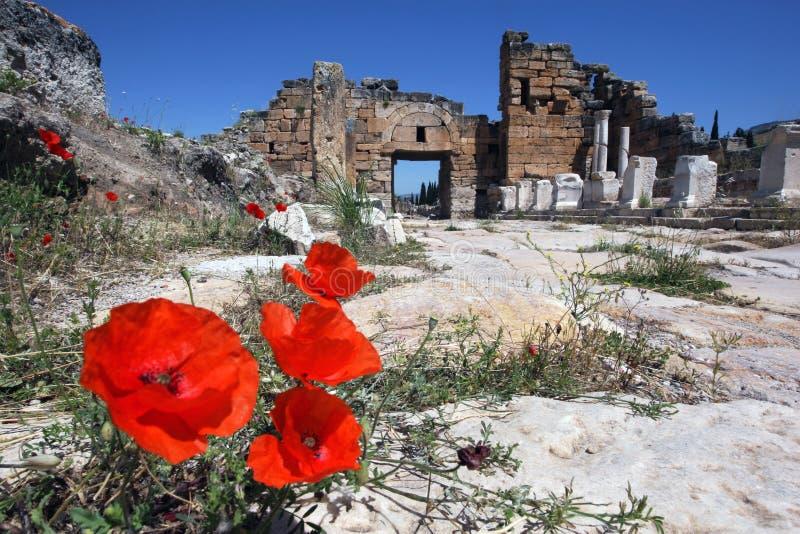 Τα λουλούδια παπαρουνών αυξάνονται μέσω των ρωγμών στο μαρμάρινο οδόστρωμα κατά μήκος της οδού Frontinus στην αρχαία πόλη Hierapo στοκ φωτογραφία