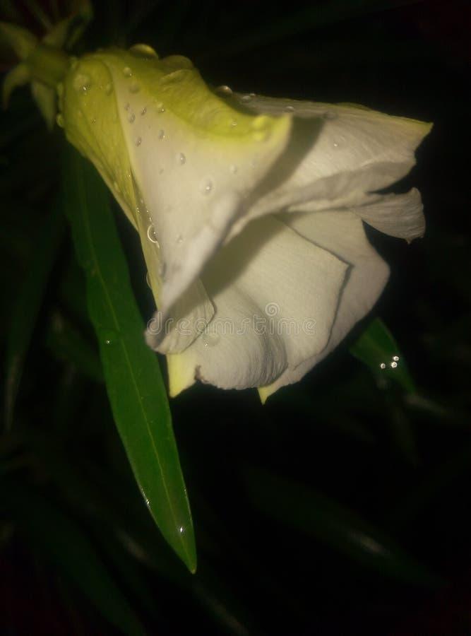 Τα λουλούδια φαίνονται τρομερά στη νύχτα στοκ εικόνα