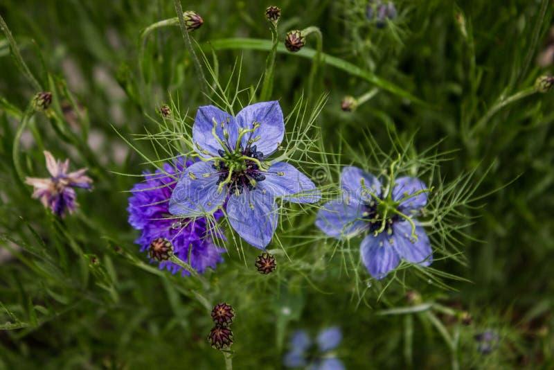 τα λουλούδια χρωμάτων καλλιεργούν ενωμένος στοκ φωτογραφία