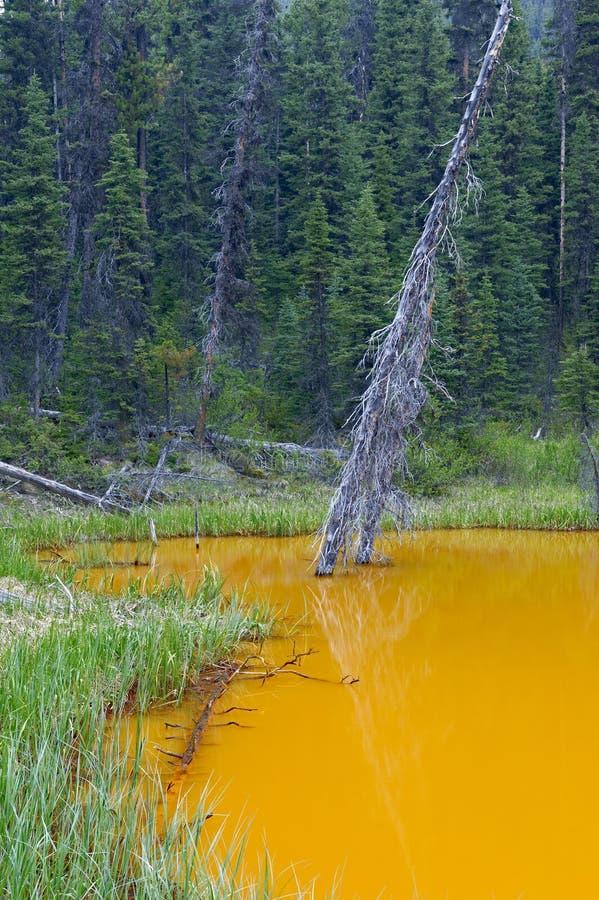Τα δοχεία χρωμάτων, εθνικό πάρκο Kootenay στοκ εικόνα