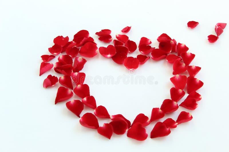 τα πέταλα κόκκινα αυξήθηκ&alp στοκ φωτογραφίες με δικαίωμα ελεύθερης χρήσης