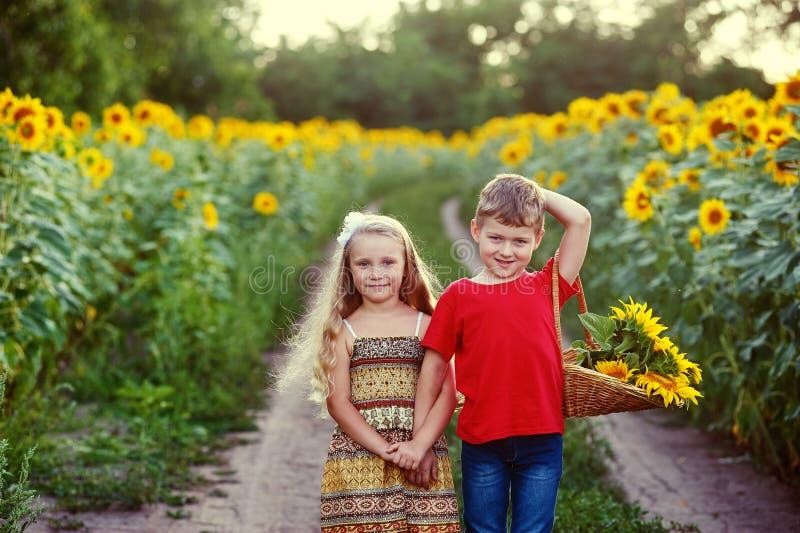 Τα παιδιά περπατούν κοντά σε έναν τομέα των ηλίανθων Η έννοια του children& x27 φιλία του s στοκ εικόνες