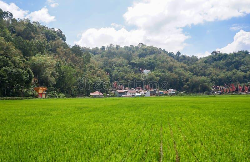 Τα παραδοσιακά χωριά στη Tana Toraja, Sulawesi στοκ φωτογραφίες με δικαίωμα ελεύθερης χρήσης