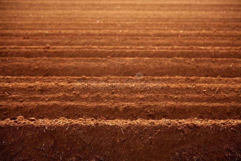τα πεδία αργίλου γεωργί&alph στοκ φωτογραφία