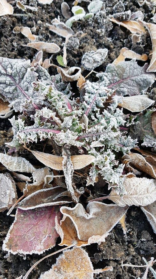Τα πεσμένα ξηρά φύλλα με τον άσπρο παγετό, αφαιρούν το φυσικό τοπ υπόβαθρο άποψης Παγωμένο φύλλωμα στο έδαφος Πρώτος παγετός πρόσ στοκ φωτογραφίες