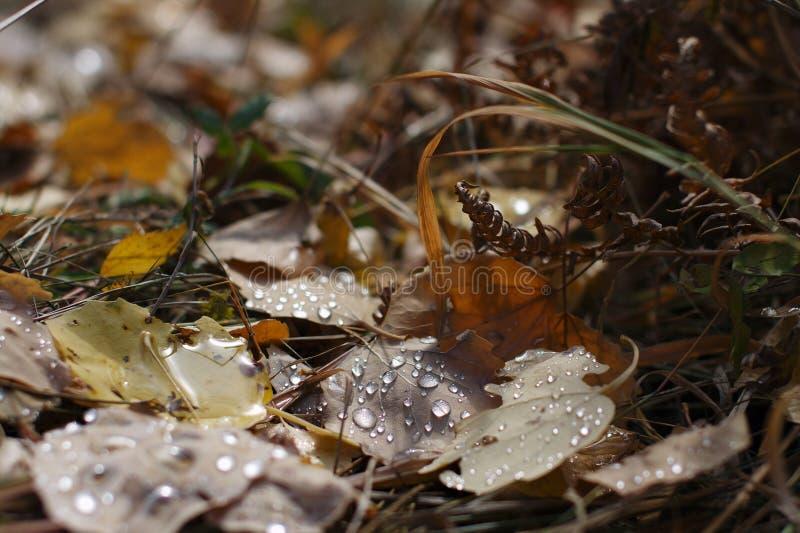Τα πεσμένα φύλλα στοκ εικόνες