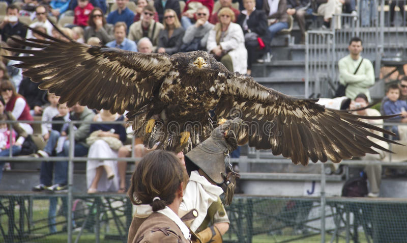 τα πετώντας τρόφιμα αετών φτάνουν το άτομο s χεριών στοκ φωτογραφία με δικαίωμα ελεύθερης χρήσης