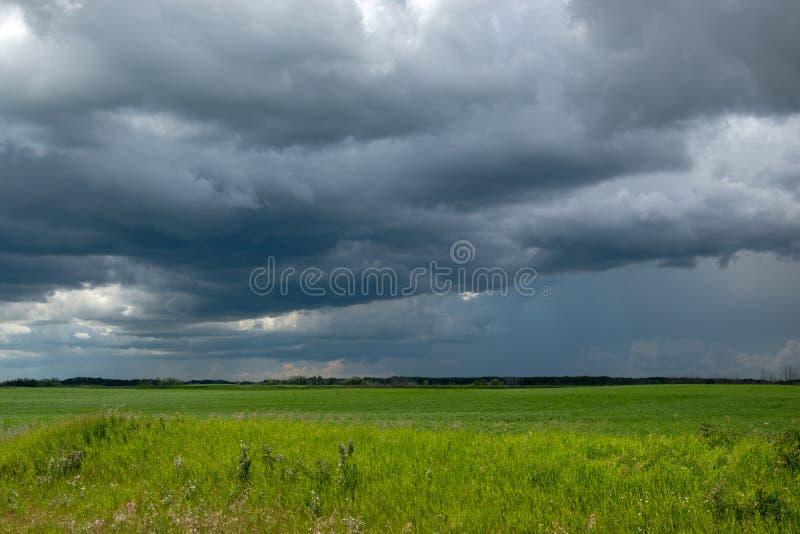 Τα πλησιάζοντας σύννεφα θύελλας επάνω από έναν τομέα canola, Saskatchewan, μπορούν στοκ εικόνα