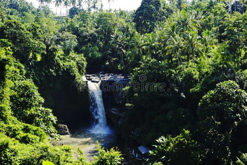 Τα πολύβλαστα πράσινα δέντρα ανοίγουν σε μια θεαματική άποψη του καταρράκτη Tegenungan, Μπαλί, Ινδονησία στοκ φωτογραφία