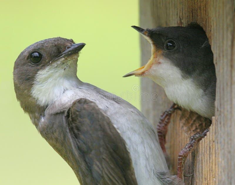 τα πουλιά μου ταΐζουν δύ&omic