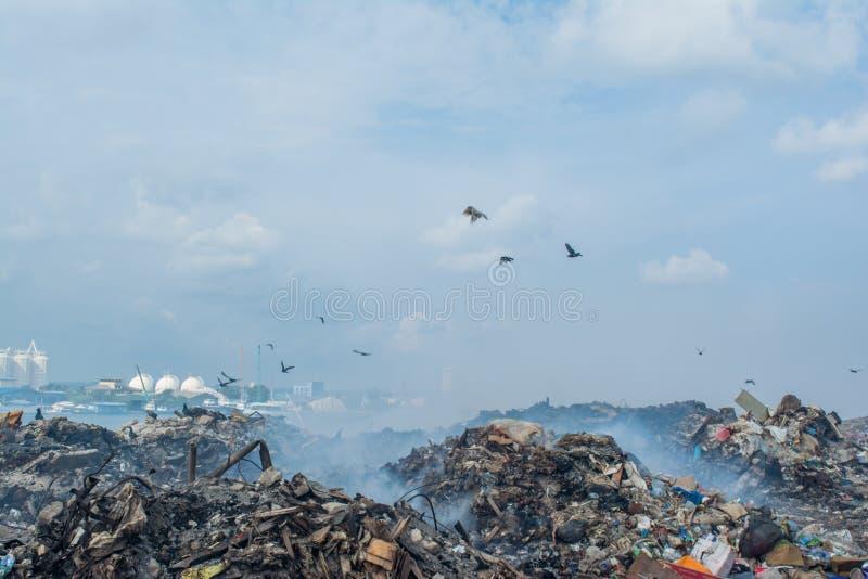 Τα πουλιά στα απορρίματα πετούν το σύνολο του καπνού, των απορριμάτων, των πλαστικών μπουκαλιών, των σκουπιδιών και των απορριμμά στοκ εικόνες