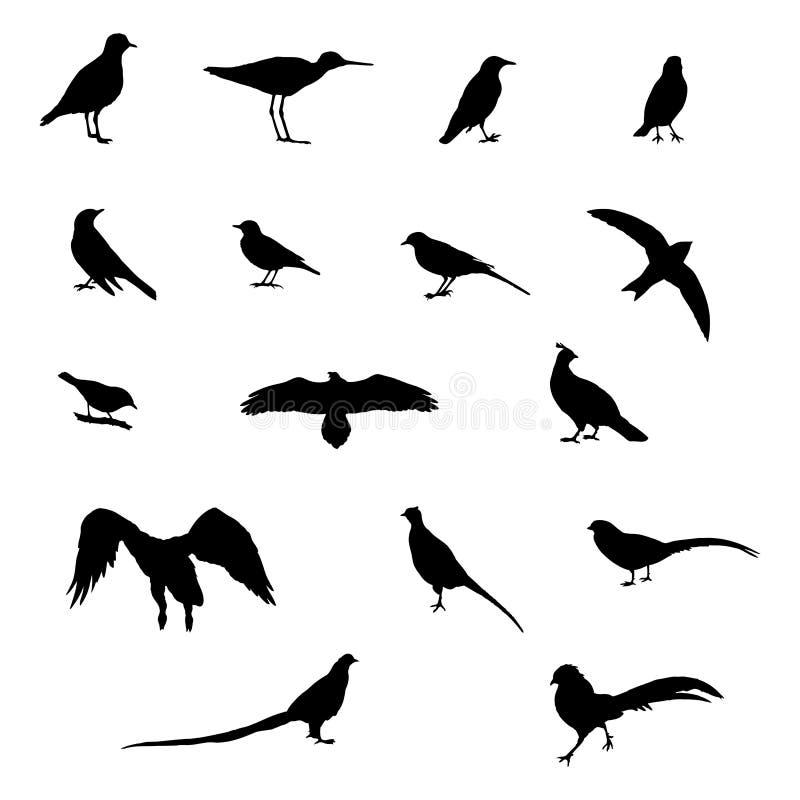τα πουλιά το διάνυσμα σκ&iot διανυσματική απεικόνιση