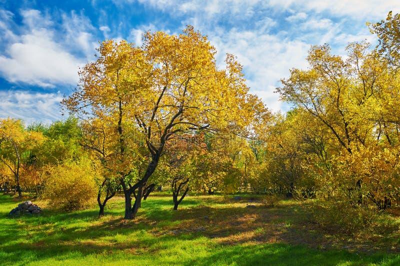 Download Τα πολύχρωμα δέντρα και Cloudscape Στοκ Εικόνα - εικόνα από ζωηρόχρωμος, πάρκο: 62711205