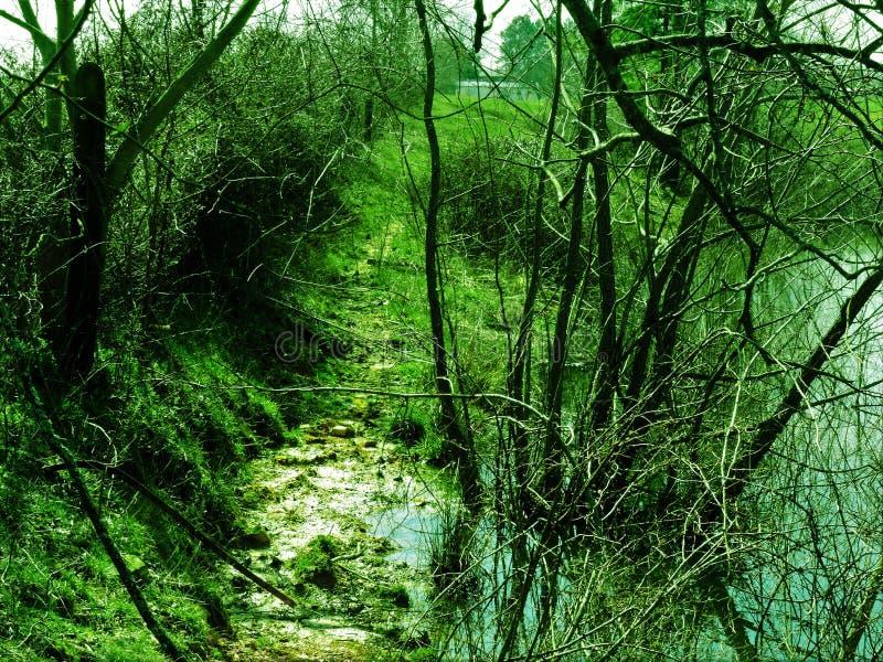 Τα πράγματα είναι πιό πράσινα από την άλλη πλευρά στοκ εικόνα με δικαίωμα ελεύθερης χρήσης