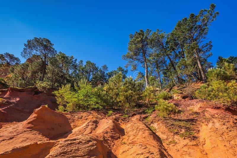 Τα πράσινα δέντρα δημιουργούν την όμορφη αντίθεση από ochre στοκ εικόνα