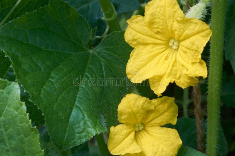 Τα πράσινα και το λουλούδι στοκ εικόνες