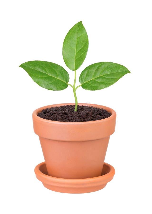 τα πράσινα να αναπτύξουν φύλ& στοκ εικόνα με δικαίωμα ελεύθερης χρήσης