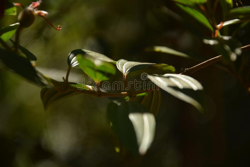 Τα πράσινα σχοινιά στοκ φωτογραφία