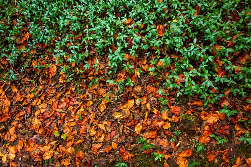 Τα πράσινα φυτά και κίτρινος βγάζουν φύλλα το υπόβαθρο στοκ εικόνα με δικαίωμα ελεύθερης χρήσης