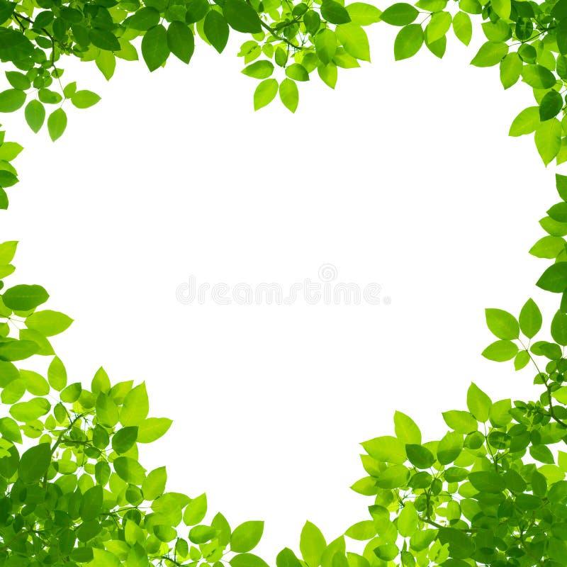 Download τα πράσινα φύλλα καρδιών δι& Στοκ Εικόνα - εικόνα από βοτανικό, ανάπτυξη: 22782509