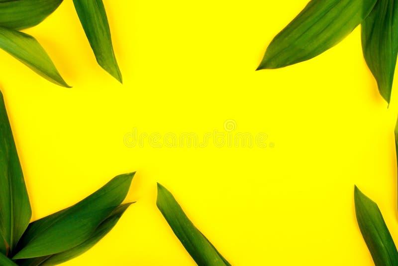 Τα πράσινα φύλλα στο κίτρινο υπόβαθρο, επίπεδο βάζουν, κορυφή, άποψη, punchy κρητιδογραφία, τόνος διδύμου στοκ φωτογραφία