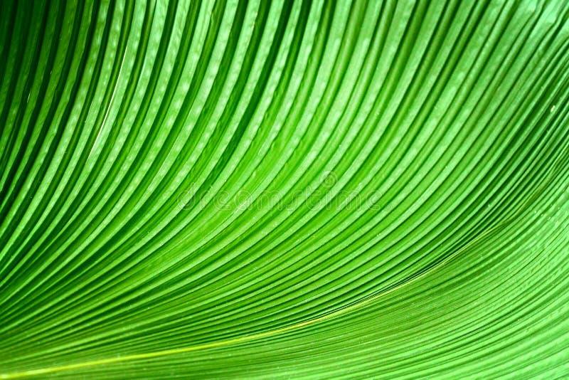 Τα πράσινα φύλλα φοινικών στοκ φωτογραφία με δικαίωμα ελεύθερης χρήσης