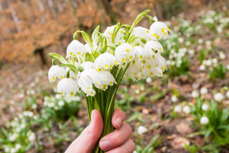 Τα πρώτα λουλούδια της άνοιξη στοκ φωτογραφίες με δικαίωμα ελεύθερης χρήσης