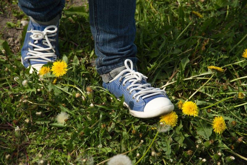 Τα πόδια είναι μεταξύ των πικραλίδων στοκ εικόνες με δικαίωμα ελεύθερης χρήσης