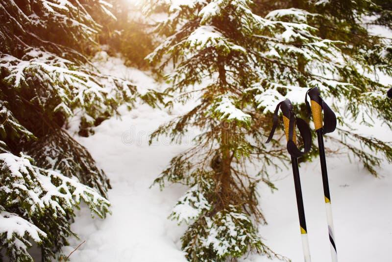 Τα ραβδιά περπατήματος είναι στο δάσος στοκ φωτογραφία με δικαίωμα ελεύθερης χρήσης