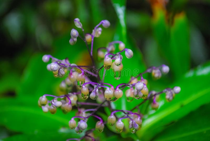 Τα ρόδινα λουλούδια με τα μακριά λουλούδια είναι ορατά στοκ φωτογραφία με δικαίωμα ελεύθερης χρήσης