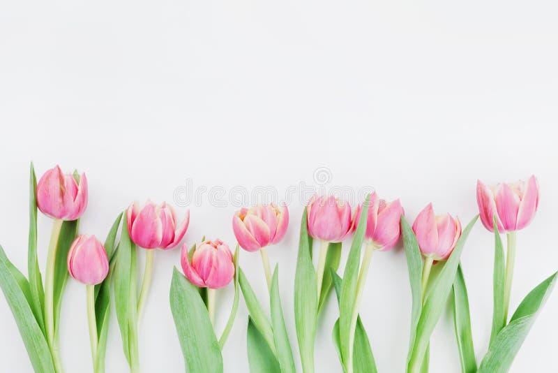 Τα ρόδινα λουλούδια τουλιπών για τη τοπ άποψη υποβάθρου άνοιξη στο επίπεδο βάζουν το ύφος με το καθαρό διάστημα για το κείμενο Χα στοκ φωτογραφίες