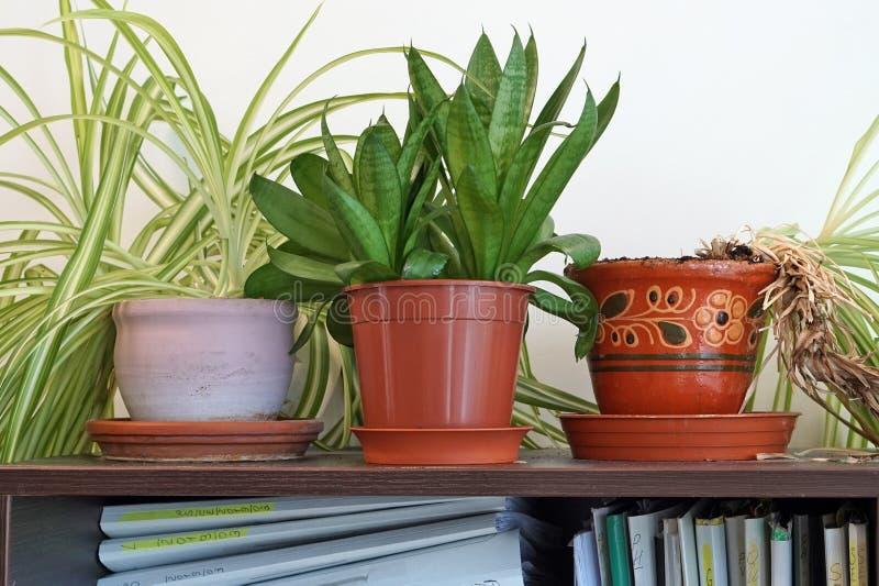 Τα σε δοχείο πράσινα λουλούδια και τα φυτά αυξάνονται στο ντουλάπι γραφείων στοκ εικόνα με δικαίωμα ελεύθερης χρήσης