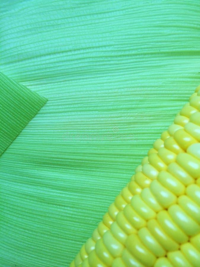 Τα σιτάρια καλαμποκιού με το πράσινο φύλλο στοκ φωτογραφίες με δικαίωμα ελεύθερης χρήσης