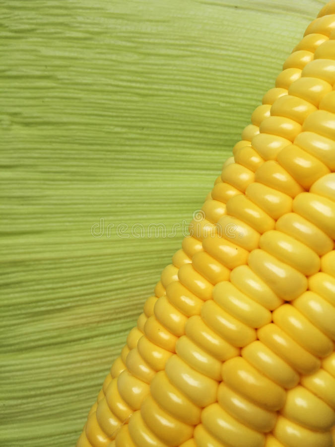 Τα σιτάρια καλαμποκιού με το πράσινο φύλλο στοκ φωτογραφίες