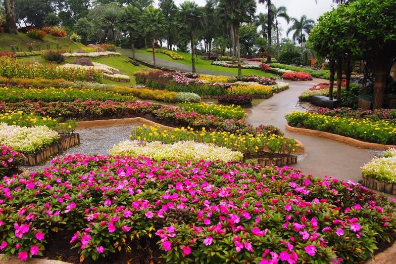 Τα σκοτεινά ρόδινα λουλούδια με μια πτώση του νερού σε ένα λουλούδι καλλιεργούν, σε ένα ζωηρόχρωμο υπόβαθρο κήπων λουλουδιών στοκ εικόνα με δικαίωμα ελεύθερης χρήσης