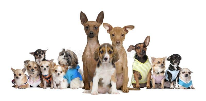 τα σκυλιά ανασκόπησης αντ στοκ εικόνες
